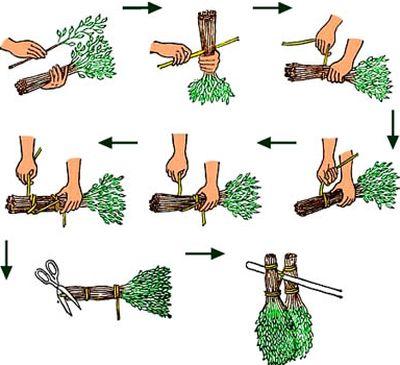 Заготовка дубовых веников для бани