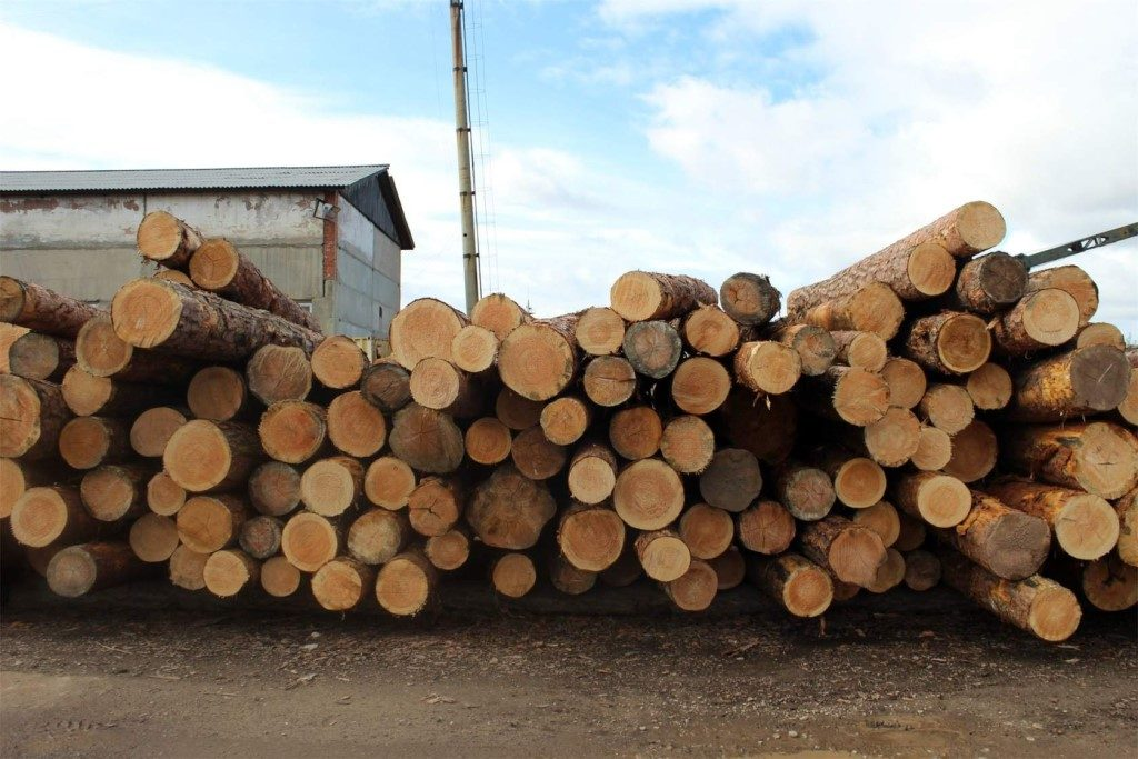 Советы по выбору и сортировке дерева